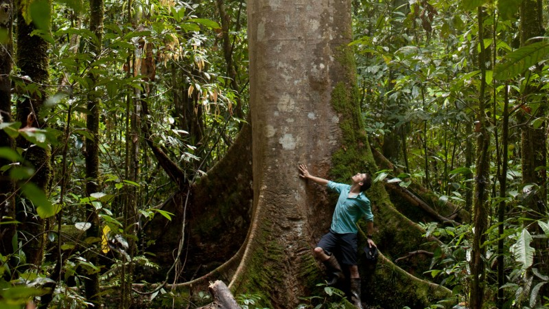 Explorer and Author Martin Holland standing at the base of an enormous tree with buttress roots in Central Kalimantan